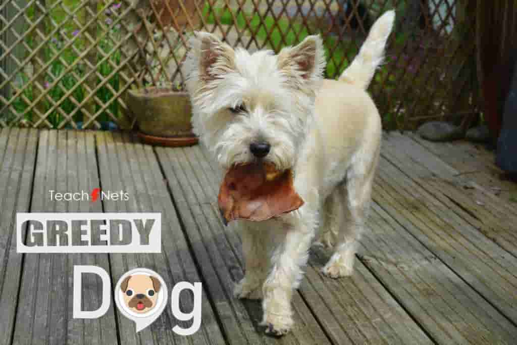 The Greedy Dog | Moral Stories For Kids